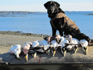 Maine Experience Guide Service: Image 429