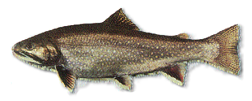 Fishing for brook trout in maine maine guides online for Maine freshwater fish